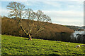 SX8754 : Tree in sheep pasture near Maypool by Derek Harper