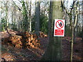 ST5574 : Stay clear of the timber stacks by Neil Owen
