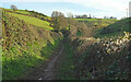 SX8855 : Greenway Walk on Combe Lane by Derek Harper