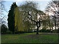 SE2233 : Pudsey Park: willow tree by Stephen Craven