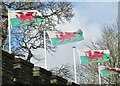 ST1876 : Cardiff Castle - Welsh Flags by Colin Smith