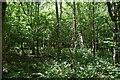 TQ6427 : Batt's Wood by N Chadwick