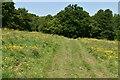 TQ6227 : Footpath, Wadhurst Park by N Chadwick