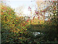 TA0457 : Natures  harvest  on  the  overgrown  bank  of  the  Driffield  Canal by Martin Dawes