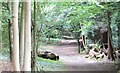 TQ1450 : Ranmore Common by Colin Smith