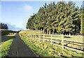 NZ0545 : Coniferous plantation at Waskerley by Trevor Littlewood