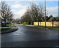 ST4287 : Tree-lined Redwick Road, Magor, Monmouthshire by Jaggery