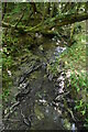 TQ6230 : Tributary stream of Tide Brook by N Chadwick