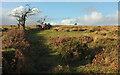SX6770 : Path by boundary work, Holne Moor by Derek Harper