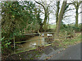 TL7604 : Tributary of Sandon Brook by Robin Webster