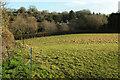 SX8658 : Sheep pasture, Lower Yalberton by Derek Harper