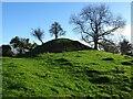 SO7937 : Castlemorton Tump by Philip Halling