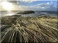 SS4092 : Marram grass by Alan Hughes