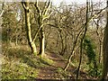 SK5939 : In Roughill Wood, Christmas Day 2020 – 1 by Alan Murray-Rust