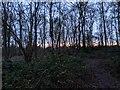 TF0820 : Sun arise! by Bob Harvey