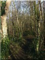 SK6440 : Path in Stoke Woods by Alan Murray-Rust