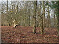 TG3130 : Area of mixed Woodland and Bracken by David Pashley