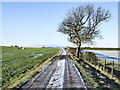 NZ0735 : Road to Chatterley with lone tree by Trevor Littlewood