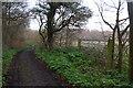 TM5182 : Track alongside Holly Grove, Covehithe by Christopher Hilton