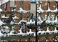NZ1051 : Birds on the feeder by Robert Graham