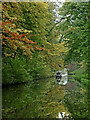 SJ8318 : Autumn colours in Castle Cutting near Church Eaton by Roger  Kidd
