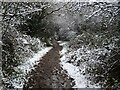 SO7843 : A wintery path by Philip Halling