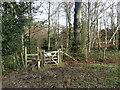 TQ5134 : On the High Weald Landscape Trail by Marathon