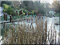 NZ3669 : Bullrushes and Frozen Pond, Northumberland Park North Shields by Les Hull