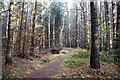 NY9662 : Woodland path above north side of Devil's Water by Trevor Littlewood