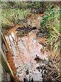 TQ5436 : Iron in the wet woodland in Broadwater Warren Nature Reserve by Marathon
