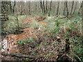 TQ5436 : Wet woodland in Broadwater Warren Nature Reserve by Marathon