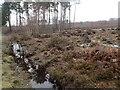 TQ5536 : Heathland at Broadwater Warren Nature Reserve by Marathon
