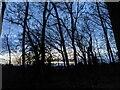 TF0820 : A winter palette  by Bob Harvey