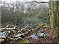 TG3429 : Pond in Heath Plantation by David Pashley