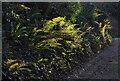 SX8964 : Ferns, Staddons Lea Lane by Derek Harper