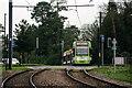 TQ3563 : Tramlink by Peter Trimming