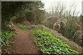 SX9167 : John Musgrave Heritage Trail, The Avenues by Derek Harper