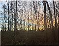 TF0820 : Lighter mornings by Bob Harvey