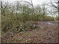 TG3327 : Wet scrub woodland by David Pashley