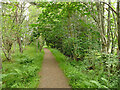 NH5250 : Footpath through Ord Wood  by Stephen Craven