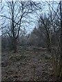 TF0820 : Frozen undergrowth by Bob Harvey