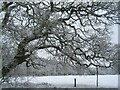 SP3176 : Tutbury fields in the snow by E Gammie
