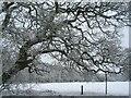 SP3176 : Tutbury fields in the snow by E Gammie