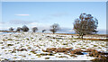 NZ0733 : Scattered trees on thinly snowed ground by Trevor Littlewood