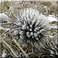 SK6244 : Frost in Gedling Country Park – 16 by Alan Murray-Rust