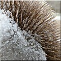 SK6244 : Frost in Gedling Country Park – 17 by Alan Murray-Rust