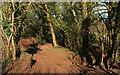 SX8358 : Muddy track near Aish by Derek Harper