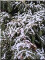 TF0820 : Memories of Christmas by Bob Harvey