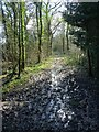 SO8648 : Bridleway and former Roman Road by Philip Halling