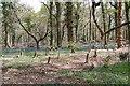 SU3007 : Pondhead Inclosure  New Forest by Clive Perrin